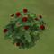 AGoR rose bush.PNG